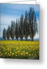 Skagit Trees Greeting Card by Inge Johnsson