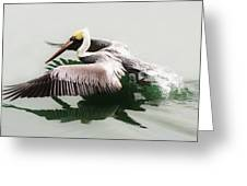 Skimming Across The Water Greeting Card by Paulette Thomas