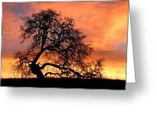 Sky On Fire Greeting Card by Priya Ghose