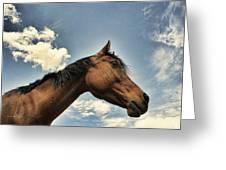 Sky Watcher Greeting Card by Karen Slagle