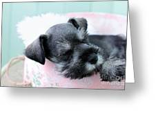 Sleeping Mini Schnauzer Greeting Card by Stephanie Frey