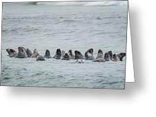 Sleeping Seals Greeting Card by Bill Wakeley