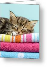 Sleepy Kitten Greeting Card by Greg Cuddiford