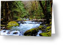 Sleepy Waters Greeting Card by Tim Rice