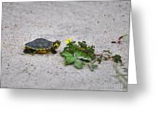 Slider And Sorrel In Sand Greeting Card by Al Powell Photography USA