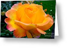 Smell The Rose Greeting Card by Eva Ason