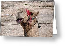 Smiling Camel Greeting Card by Sandra Pena de Ortiz