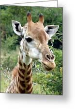 Smiling Giraffe Greeting Card by Ramona Johnston