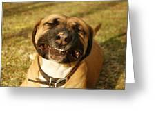 Smiling Greeting Card by Kristia Adams