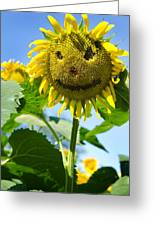 Smiling Sunflower Greeting Card by Donna Doherty