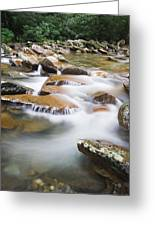 Smokey Mountain Creek Greeting Card by Adam Romanowicz