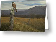 Smoky Mountain Hunter-american Kestrel Greeting Card by James Willoughby III