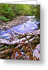 Smoky Mountain Stream Two Greeting Card by Frozen in Time Fine Art Photography