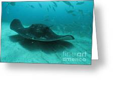 Smooth Ray Greeting Card by Crystal Beckmann