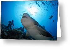 Snacking Bull Shark Greeting Card by Dave Fleetham