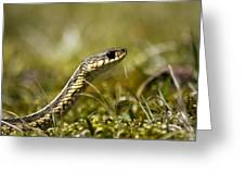Snake Encounter Close-up Greeting Card by Christina Rollo