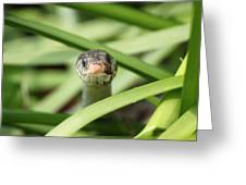 Snake In The Grass Greeting Card by Jennifer Doll