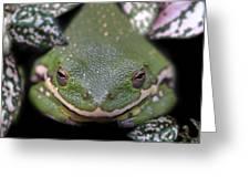 Snakefrog Greeting Card by Joseph Tese