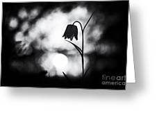 Snakes Head Fritillary Monochrome Greeting Card by Tim Gainey