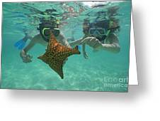 Snorkellers holding a four legs starfish Greeting Card by Sami Sarkis