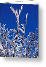 Snow And Ice Coated Branches Greeting Card by Anonymous