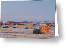 Snow Covered Bales Greeting Card by Scott Bean