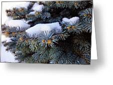 Snow Covered Spruce Greeting Card by Mikki Cucuzzo