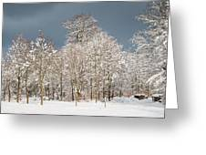 Snow Covered Trees In The Forest In Winter Greeting Card by Matthias Hauser