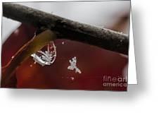 Snow Crystal In Water Drop Greeting Card by Dan Friend