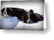 Snow Eaters Greeting Card by Patti Whitten