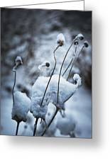 Snow Forms Greeting Card by Belinda Greb