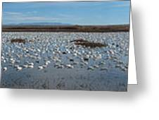 Snow Geese Bosque Greeting Card by Steven Ralser