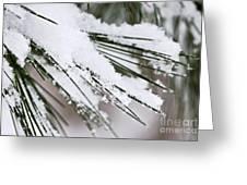 Snow on pine needles Greeting Card by Elena Elisseeva