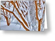 Snow Wonderful Snow - Greensboro North Carolina Greeting Card by Dan Carmichael