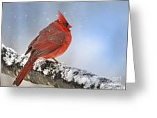 Snowing On Red Cardinal Greeting Card by Nava  Thompson
