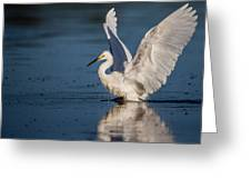Snowy Egret Frolicking In The Water Greeting Card by Andres Leon