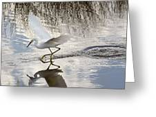 Snowy Egret Gliding Across the Water Greeting Card by John Bailey