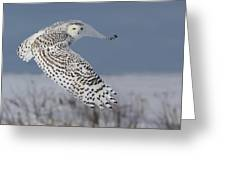 Snowy In Action Greeting Card by Mircea Costina Photography