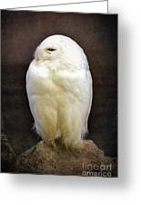 Snowy Owl Vintage  Greeting Card by Jane Rix