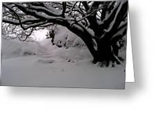 Snowy Path Greeting Card by Amanda Moore