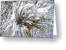 Snowy Pine Greeting Card by Aimee L Maher Photography and Art