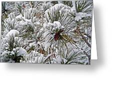 Snowy Pine Needles Greeting Card by Aimee L Maher Photography and Art