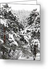 Snowy Pines Greeting Card by Kathleen Struckle