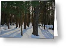 Snowy Trees Greeting Card by Stephen Melcher