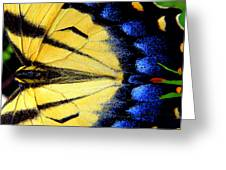 So Bright So Beautiful Greeting Card by Kim Galluzzo Wozniak