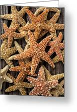 So Many Starfish Greeting Card by Garry Gay