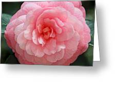 Soft And Pink Greeting Card by Suzanne Gaff