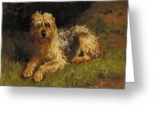 Soft Coated Wheaten Terrier  Greeting Card by Alfred Duke