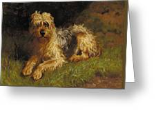 Soft Coated Wheaten Terrier  Greeting Card by Alfred Duke