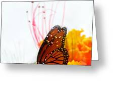 Soft Embrace Greeting Card by Kume Bryant
